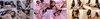 【With 2 bonus videos】 Yui Hatano & Tsubaki no Tickle Series 1-3 together DL