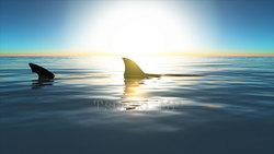 CG Shark120518-001