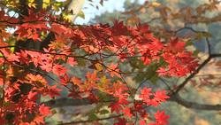 Autumn 009 (stock movie HD material)
