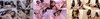 【有2个奖励视频】Yui Hatano&Tsubaki no Tickle系列1-3连同DL